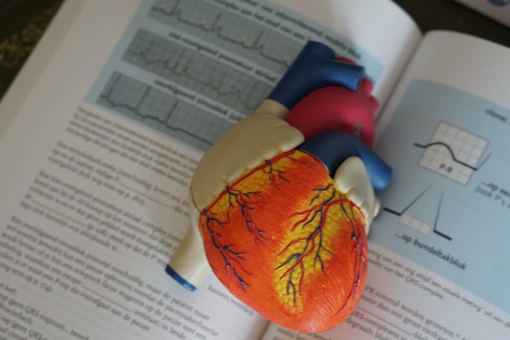 Internist – Kardiologie & Angiologie, Dr. Stefan Trummer - Holdhaus & Nord